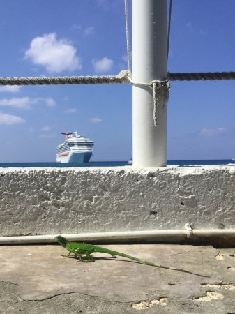 Rackam's Waterfront Restaurant & Bar : Visited while on a cruise, saw a lizard