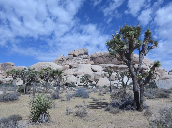 Twentynine Palms, CA: Stunning scenery at JTNP
