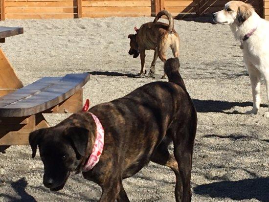 Lafayette, CO: Lucy and Frita (Romero wandering)
