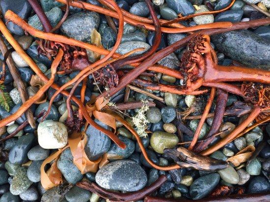 Sooke, Canada: Sombrio Beach, along the Juan de Fuca trail