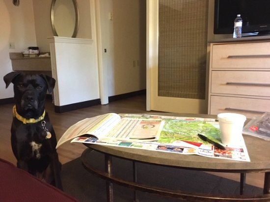 Red Roof Inn Hilton Head Island: My dog Missy telling me to hurry up studying the map of the island