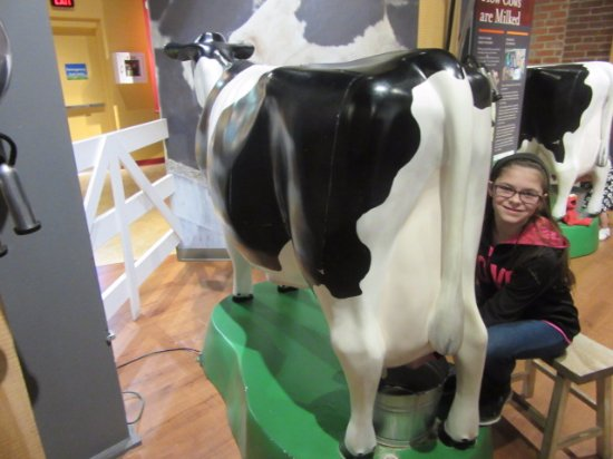 Columbia, PA: Trying out milking a cow!