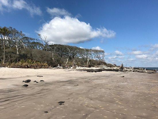 Big Talbot Island State Park: photo3.jpg