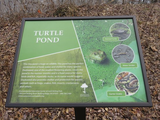 Environmental Education Center at Lord Stirling Park: The Turtle Pond