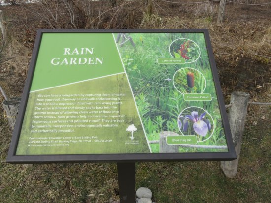 Environmental Education Center at Lord Stirling Park: Rain Garden