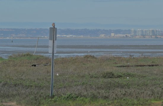 Chula Vista, CA: Sweeping bay view with bird atop sign
