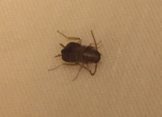 Auburn, AL: Bedbug found in room 236