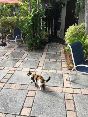 Wilton Manors, FL: I love this cat!