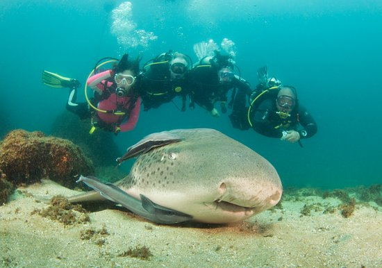 Southport, Australien: Cook Island Marine Park is just one of the many dive sites to visit