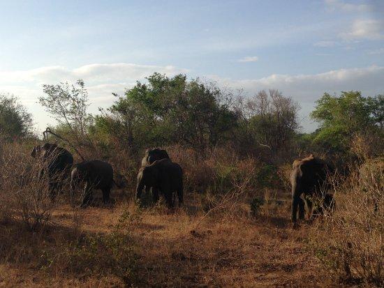 Uda Walawe National Park, Sri Lanka: A herd