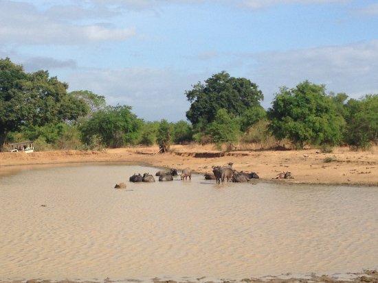 Uda Walawe National Park, Sri Lanka: Serene