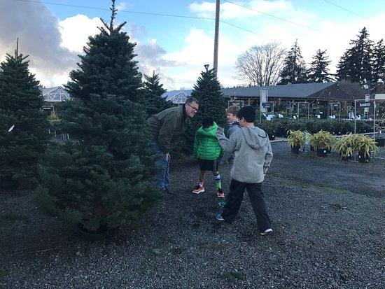 Woodinville, WA: Picking out a Christmas Tree!