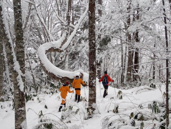 Satoyama Experience : 2km tracking in the snow..