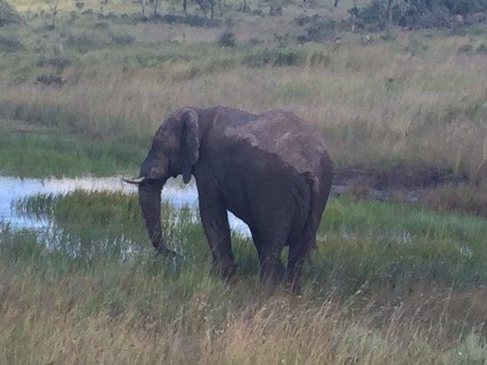 Заповедник Велгевонден, Южная Африка: Bull elephant taking a mud bath