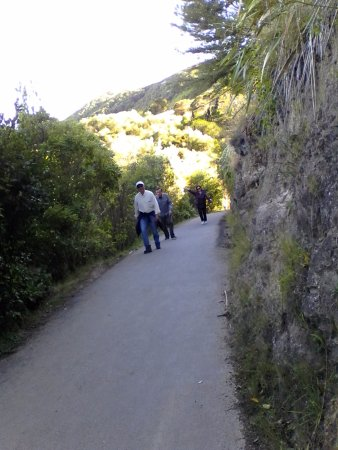 Nelson, Nueva Zelanda: The path up the hill is nicely sealed, but can be steep.