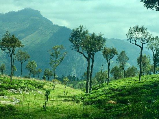 Bandarawela, Sri Lanka: photo1.jpg