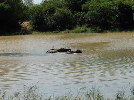 Tissamaharama, Sri Lanka: elephants in the lake