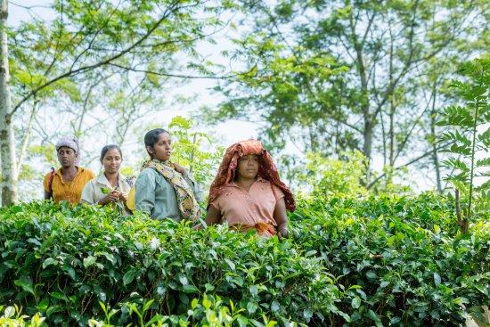 Akuressa, Sri Lanka: Our team