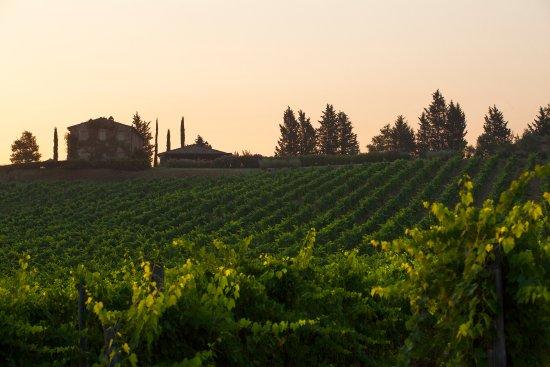 Montalcino, Italy: Gauggiole Vineyard