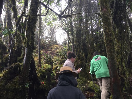 Brinchang, Malaisie : Mossy Forest