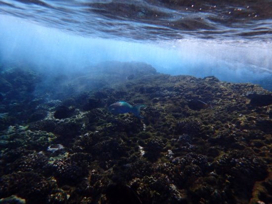 Maalaea, HI: Under sea