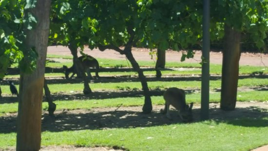 The Vines, Australien: View from room