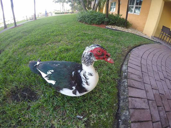 Marriott's Villas at Doral: visitante na porta do quarto