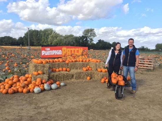 Basildon, UK: We are excited to welcome you to the Pumpkin Patch!