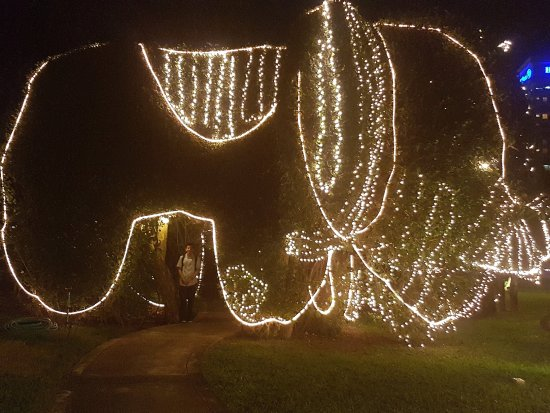 Christmas Hua Hin 2020 The Topiary elephant lit at Christmas   Picture of Centara Grand