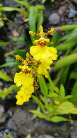 Garden of the Sleeping Giant: orchid