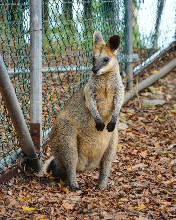 Bundaberg, Australië: Alexandra Park