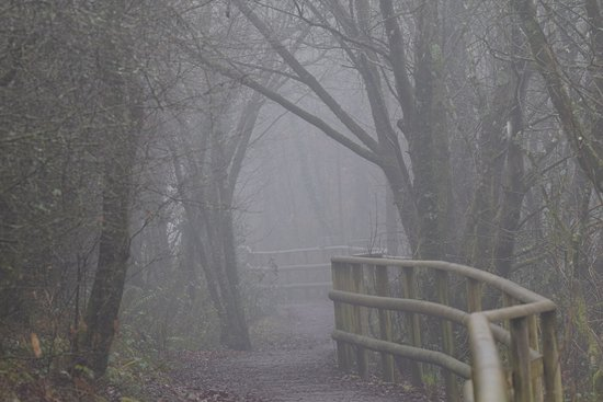 Parc Slip Nature Reserve: Fog added to the atmospheric feel at Parc Slip
