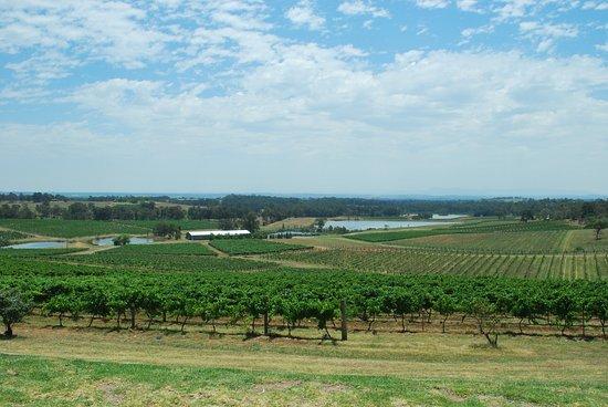 โพโคลบิน, ออสเตรเลีย: Fantastic view from Audrey Wilkinson