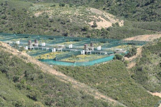 Sao Bartolomeu de Messines, Portugal: Reserva do Lince Ibérico