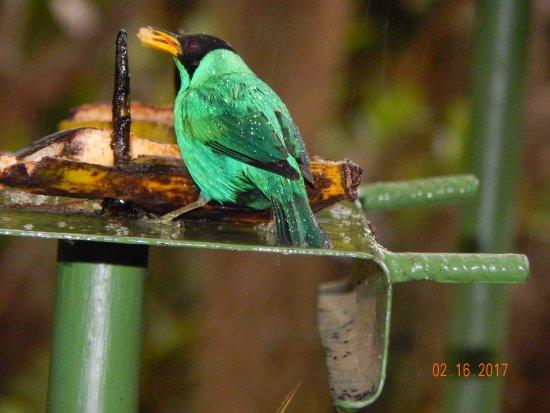 Talamanca Reserve Bild