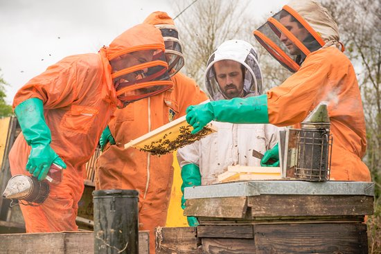 South Molton, UK: Beekeeping experience day