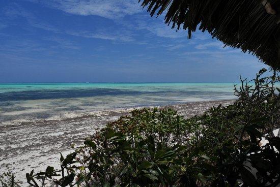 La Papaye Verte: Vue