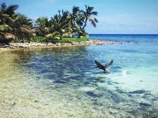 Placencia, Belize: Laughing Bird Caye