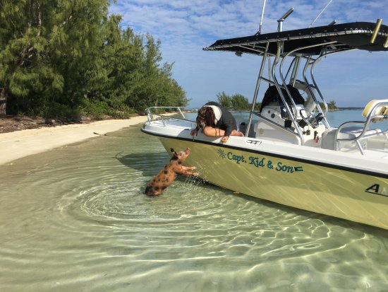 Capt. Kid & Son Charters: Pig at the boat