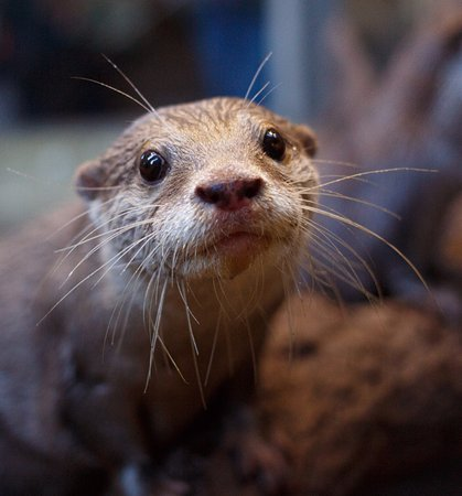 Newby Bridge, UK: Meet Olly and Lucy our otters.