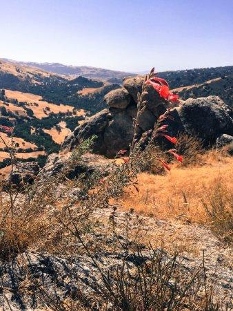 Sunol, كاليفورنيا: Summer wildflowers on Flag Hill.