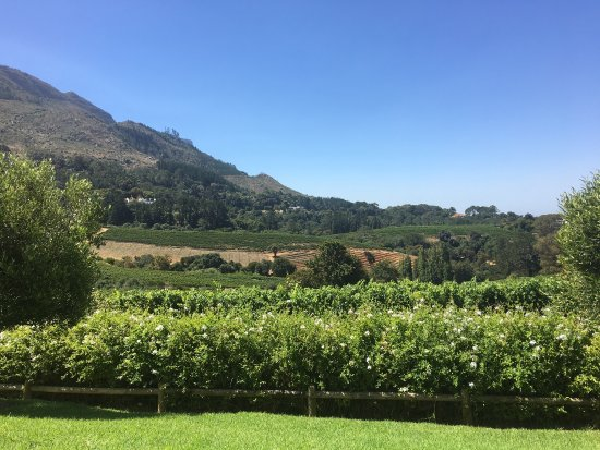 Constantia, South Africa: photo2.jpg