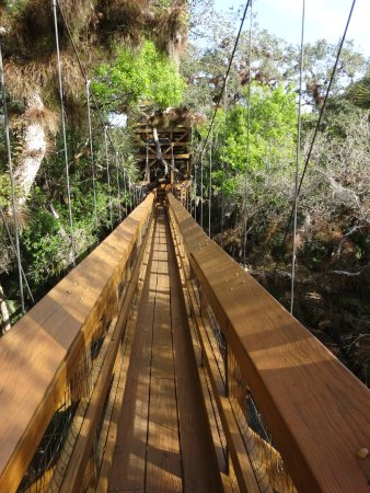 Myakka River State Park: Canopy swinging bridge. Different perspective.