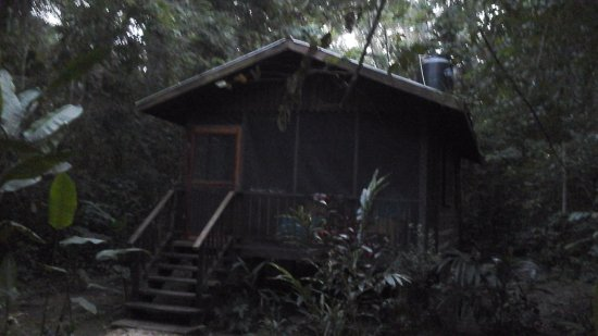 Macaw Bank Jungle Lodge: Our hut at Macaw Bank Lodge