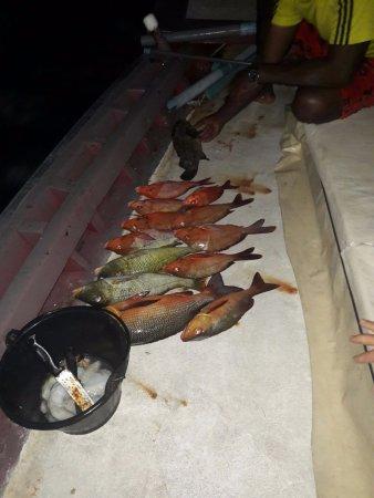 Rinbudhoo: Pesca notturna