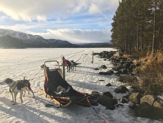 جيلو, النرويج: photo0.jpg