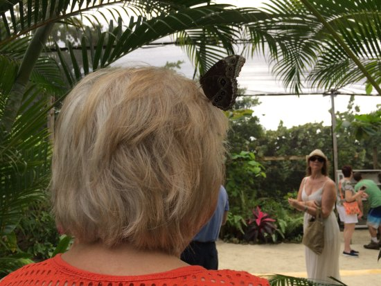 Quartier D'Orleans, St. Martin/St. Maarten : A butterfly lands on a lady's head.