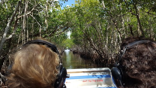 Everglades City Airboat Tours: Cruising through the mangroves