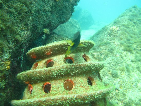 Scuba Diving in Cabo: Our secret spot, scultures creating sea life already!