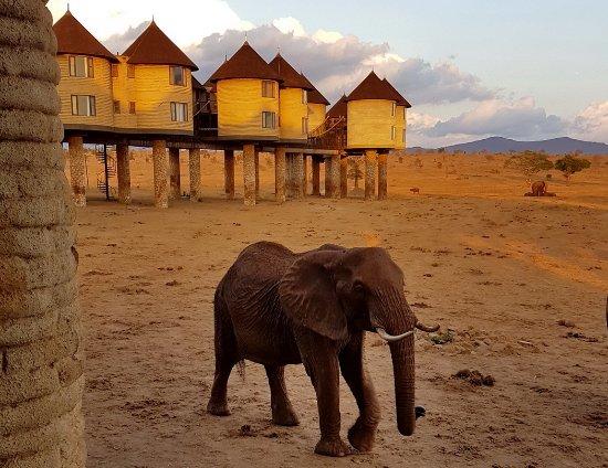 Tsavo, Kenya: Vue depuis la zone d'observation sous le restaurant...